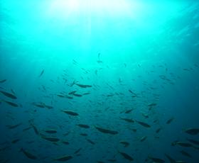 海は生命の母